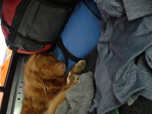 I think that's our bedding in the blue duffle bag. Ownership has never bothered Capi.