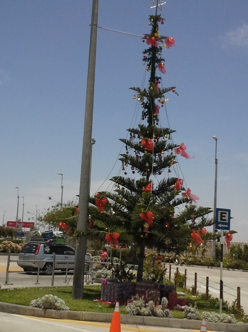 The Christmas Tree at the Border