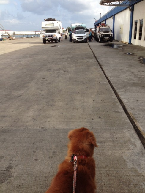 Capi had to stay away while the drug dogs sniffed the cars at Customs